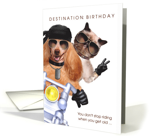 Farther Down The Page Weve Searched Out Some Of Finest Card Creations For Cat Minded In World From An International Sampling Artists
