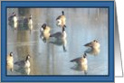 Geese Swimming Along in Vermilion River card