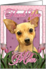 Thank you MOM Chihuahua Dog in Pink Tulips card