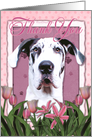 Thank You Harlequin Great Dane Dog in Pink Tulips card