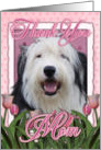 Thank You MOM Old English Sheepdog in Pink Tulips card