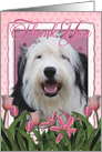 Thank You Old English Sheepdog in Pink Tulips card