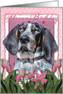 Happy Birthday Bluetick Coonhound Dog in Pink Tulips card