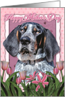 Happy Mother's Day Bluetick Coonhound Dog in Pink Tulips card