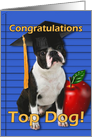 Graduation Congratulations Boston Terrier card