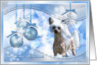 Magic of Christmas - Chinese Crested - Kahlo - Combo card
