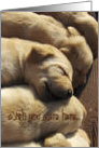Wish You Were Here - Labrador Puppies card