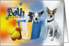 Hot Bath Hope You're Feeling Better - Rat Terriers card