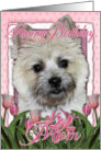 Happy Birthday Mom Cairn Terrier in Pink Tulips card