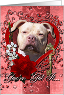 Valentine's Day - Key to My Heart - Pitbull card