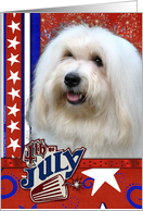 July 4th Firecracker - Coton de Tulear card