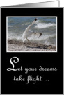 Graduation Congratulations - Seagull Taking Flight From Beach card