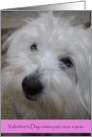 Holidays--Happy Valentine's Day--Coton Dog card