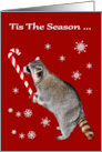 Christmas, general, Raccoon licking big candy cane on red, snowflakes card