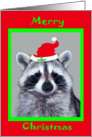 Christmas, general, raccoon wearing Santa Hat in a green frame, red card