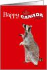 Canada Day, general, Raccoon holding Canadian flag on red, maple card