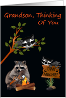 Thinking Of You, Grandson, At Summer Camp, raccoon with bonfire card