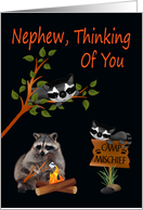 Thinking Of You, Nephew, At Summer Camp, raccoon with bonfire, black card