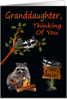 Thinking Of You, Granddaughter, At Summer Camp, raccoon with bonfire card