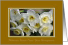 Welcome Home From Your Honeymoon - White Daffodils card