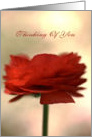 Thinking Of You - Ranunculus Flower card