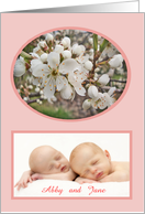 Plum blossom,new baby twins ,pink, photo card. card