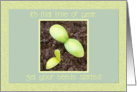 Starting Seeds in the Garden card