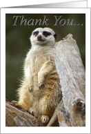 Meerkat, Thank You card