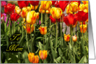Mother's Day - Red and Yellow Tulips in a Garden card