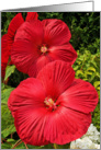 Sympathy - Loss - General - Hibiscus card