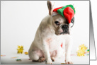French Bulldog Humor, Christmas Card