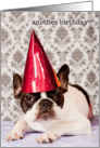 Birthday, French Bulldog in party hat, Humor card