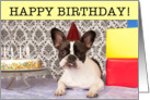 Birthday, French Bulldog with cake, Humor card