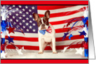 Labor Day, French Bulldog & American Flag Humor card
