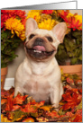 Happy Fall, Smiling French Bulldog card
