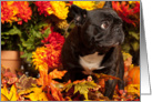 Fall Already? Brindle French Bulldog card