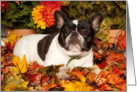Happy Fall, Pied French Bulldog card