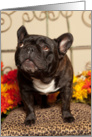 Fall, Brindle French Bulldog card