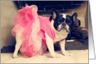 Friendship, Pied French Bulldog in Tutu card