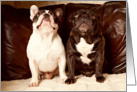Friendship, Brindle and Pied French Bulldog card