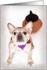 Fawn Colored French Bulldog Halloween Card