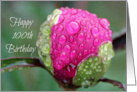 Happy 100th Birthday, Colorful Rosebud with Raindrops, Photograph card