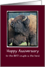 Happy Anniversary, Buffalo Nuzzle Hug Photograph, Humor card