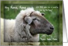Hey Mama Will You Make Me a Sweater, Sheep Photo Humor card