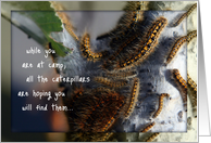 Caterpillars Thinking About You at Camp, Caterpillar Photo card