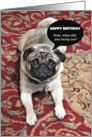 Happy Birthday, Now What Did You Bring Me? Humor, Pug Photograph card