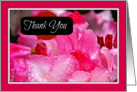 Thank You, Pink Azalea Photograph, Blank Inside card