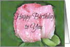 Happy Birthday to You, Rosebud with Raindrops Photograph card