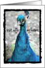 Thank You, Ruffle My Feathers, Colorful Peacock Photograph, Funny card