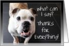 What Can I Say, Thanks for Everything, English Bulldog Photo, Blank Inside card
